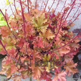 Heuchera-lilás-pirosas-bronzos