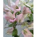 21-Rózsás tulipános-Toscan- Murvafürt-Bougainvillea